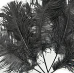 black ostrich tail feathers