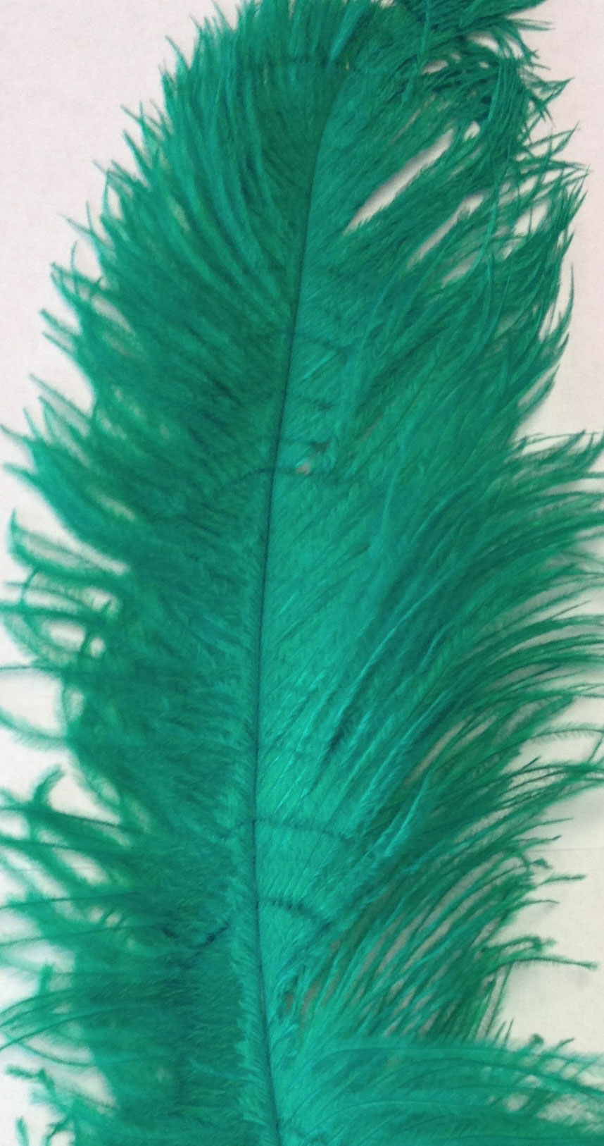jade color ostrich feathers