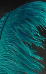 teal ostrich plumes